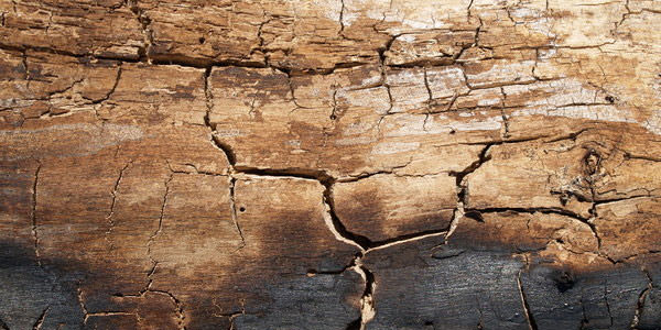 Free High-Quality Damaged and Burnt Wood Textures 12