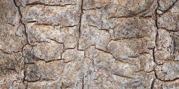 High-Quality Bark Textures #1. Bark Texture