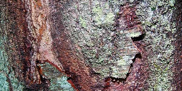 High-Quality Bark Textures #4. Tree bark