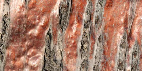 High-Quality Bark Textures #6. Bark Texture