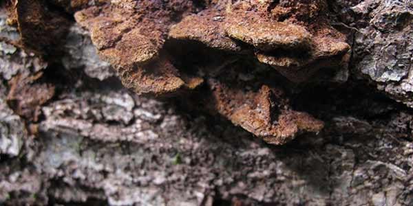 High-Quality Bark Textures #8. Bark with fungus macro