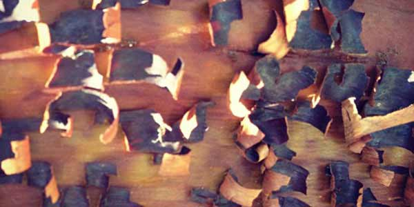 High-Quality Bark Textures #10. Bark of the madrone