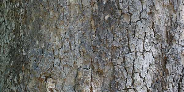 High-Quality Bark Textures #11. Very Old Tree bark