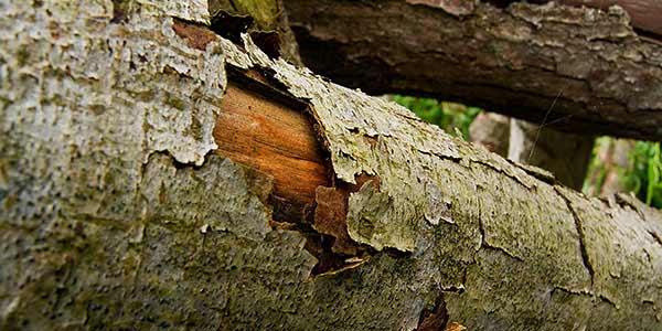 High-Quality Bark Textures #13. Curled Bark