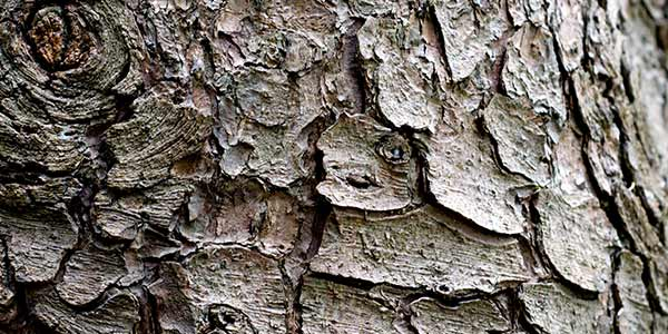 High-Quality Bark Textures #16. Bark Texture