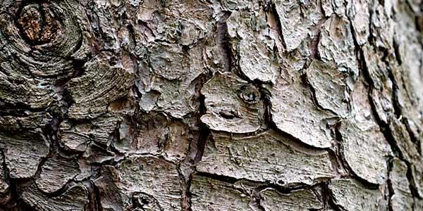 High-Quality Bark Textures #16. Bark Texture