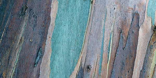 High-Quality Bark Textures #17. Bark Texture