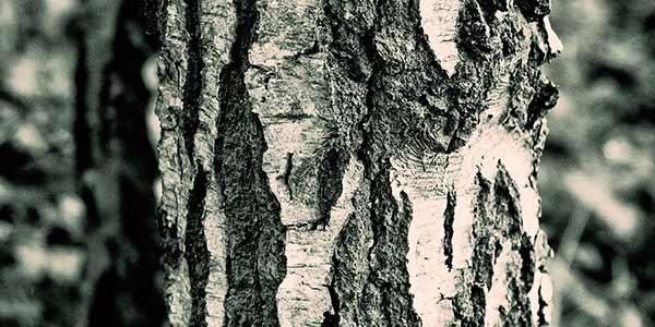 High-Quality Bark Textures #18. Bark Texture