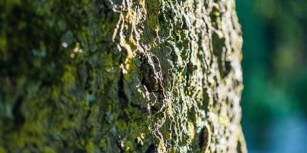 High-Quality Bark Textures #19. Mossy Bark