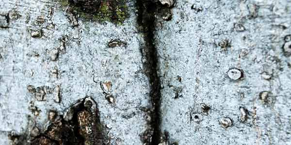 High-Quality Bark Textures #2. Bark Texture