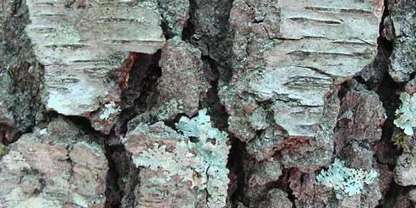 tree bark texture photoshop tutorial